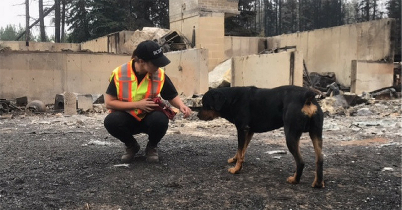 BC SPCA wants animals included in emergency legislation - My Powell River Now